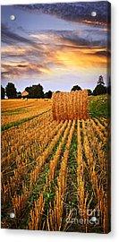 Golden Sunset Over Farm Field In Ontario Acrylic Print by Elena Elisseeva