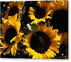 Golden Sunshine Acrylic Print by Cole Black