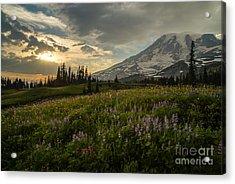 Golden Sunstar Rainier Meadows Acrylic Print by Mike Reid