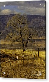 Acrylic Print featuring the photograph Golden Tree by Kristal Kraft