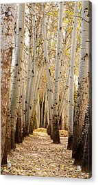 Acrylic Print featuring the photograph Golden Trees Dunhuang China by Sally Ross