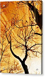 Golden Trees Acrylic Print by Marty Koch