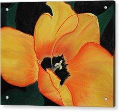 Golden Tulip Acrylic Print by Anastasiya Malakhova