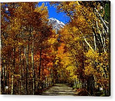 Acrylic Print featuring the photograph Golden Tunnel by Karen Shackles