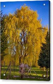 Golden Willow Tree Acrylic Print by Omaste Witkowski