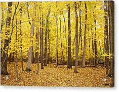 Golden Woods Acrylic Print