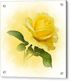 Golden Yellow Rose Acrylic Print by Jane McIlroy