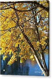 Acrylic Print featuring the photograph Golden Zen by Chalet Roome-Rigdon