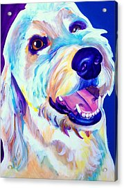 Goldendoodle - Penny Acrylic Print by Alicia VanNoy Call