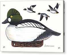Goldeneye Decoy Acrylic Print by James Lewis