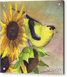 Goldfinch And Sunflowers Acrylic Print by Susan Herbst
