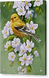 Goldfinch Blossoms Greeting Card 2 Acrylic Print by Crista Forest