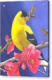 Goldfinch Acrylic Print by Catherine G McElroy