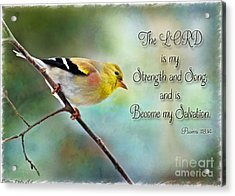 Goldfinch With Rosy Shoulder - Digital Paint And Verse Acrylic Print by Debbie Portwood