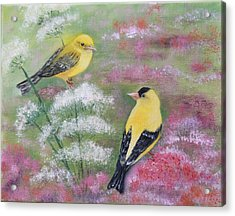 Goldfinches Acrylic Print