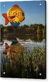 Goldfish Reflection Acrylic Print