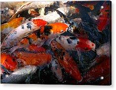 Goldfish Shimmer Acrylic Print