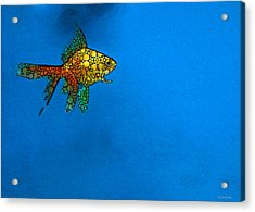 Goldfish Study 4 - Stone Rock'd Art By Sharon Cummings Acrylic Print by Sharon Cummings