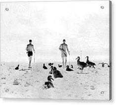 Golf With Gooney Birds Acrylic Print by Underwood Archives