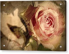 Gone With The Wind Romantic Rose Close-up Acrylic Print