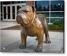 Gonzaga Bulldog Acrylic Print by Inge Johnsson