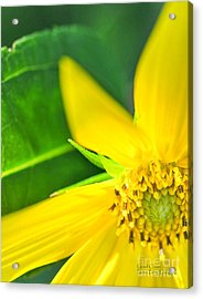 Acrylic Print featuring the photograph Good Cheer by David Perry Lawrence