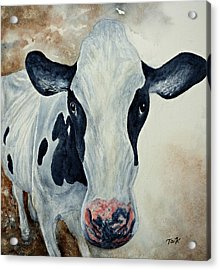 Good Mooo To Youuu Acrylic Print by Thomas Kuchenbecker
