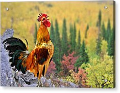 Good Morning America Acrylic Print by Christine Till