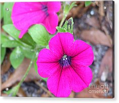 Acrylic Print featuring the photograph Good Morning by Andrea Anderegg
