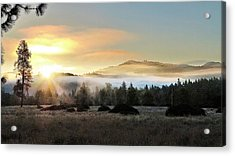 Acrylic Print featuring the photograph Good Morning by Julia Hassett