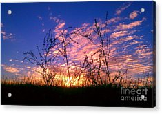 Good Morning Laramie Acrylic Print by Chris Tarpening