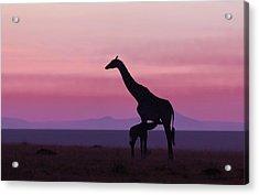 Good Morning Masai Mara 7 Acrylic Print