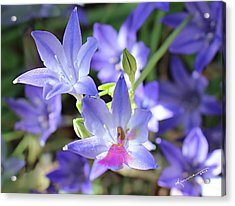 Good Morning My Fairy Acrylic Print by Kume Bryant