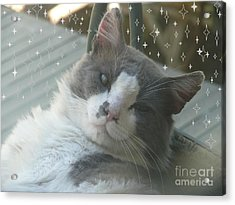 Good Morning Starshine Acrylic Print by Jacquelyn Roberts