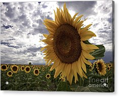 Acrylic Print featuring the photograph Good Morning Sunshine by Kristal Kraft