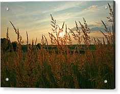 Good Morning Sunshine Acrylic Print