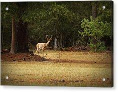 Good Night Deer Acrylic Print by Linda Unger