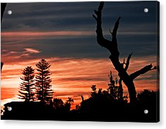 Good Night Trees Acrylic Print by Miroslava Jurcik