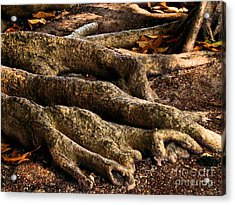 Good Roots Acrylic Print by Claudette Bujold-Poirier