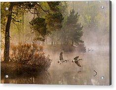 Goose Fight Acrylic Print