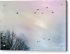 Goose Flight Acrylic Print by Hannes Cmarits