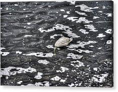Goose Hunting Acrylic Print