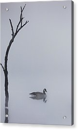 Goose Of The Fog Acrylic Print by Bill Wakeley