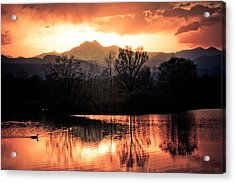 Goose On Golden Ponds 1 Acrylic Print by James BO  Insogna