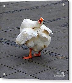 Goose Talk Acrylic Print