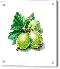 Gooseberry Painting Acrylic Print by Irina Sztukowski