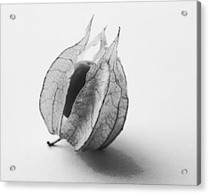 Gooseberry In Black And White Acrylic Print