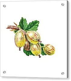 Gooseberry Still Life Acrylic Print by Irina Sztukowski