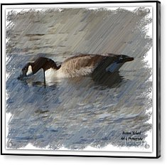 Goosey Lucy Painting Acrylic Print