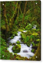 Gorge Greens Acrylic Print by Darren  White